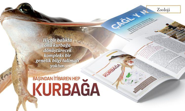 basindan_beri_kurbaga